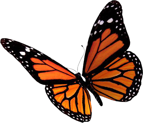 Best Free Butterfly Png Image image #6743
