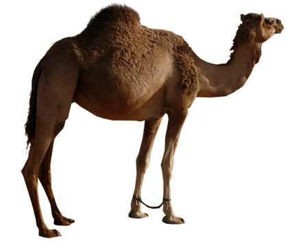 Download Camel Latest Version 2018 image #37108
