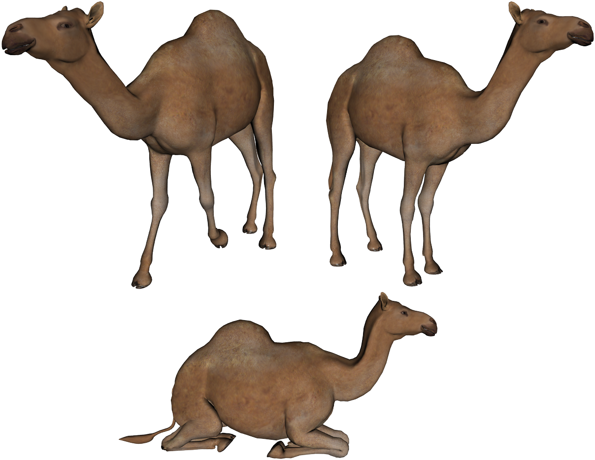 Camel Png Photo Transparent image #37104