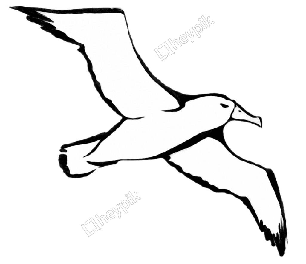 Cartoon character Albatross Photos