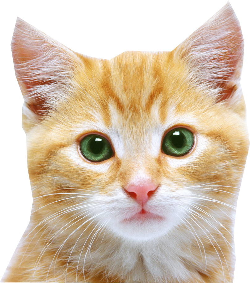 Cat Face Png image #40377