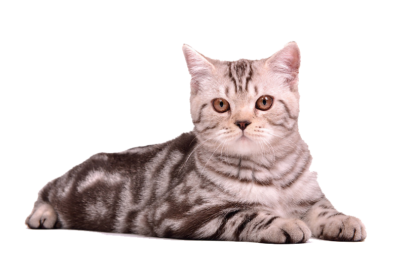 Cat Stretched Png image #40364