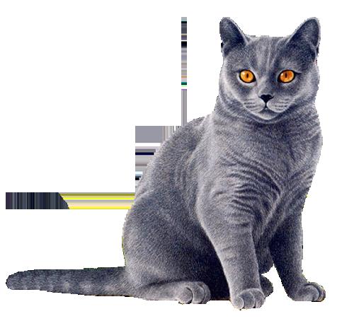 Cat Png image #40348