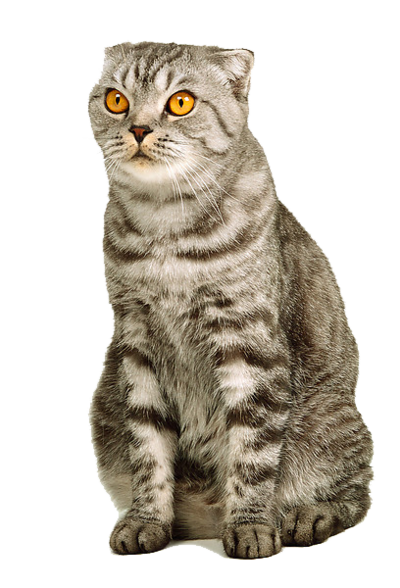 Sitting Cat Png image #40366