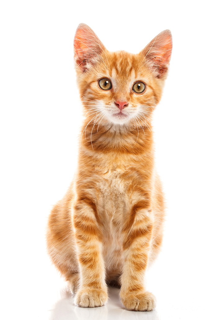 Cute Baby Cat Png image #40372
