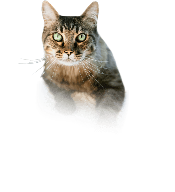 Scarry Cat Png image #40373