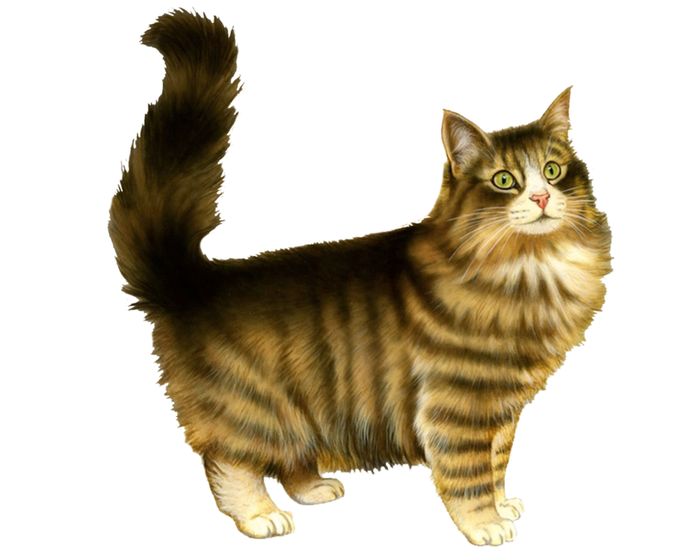 Bloated feathered cat png