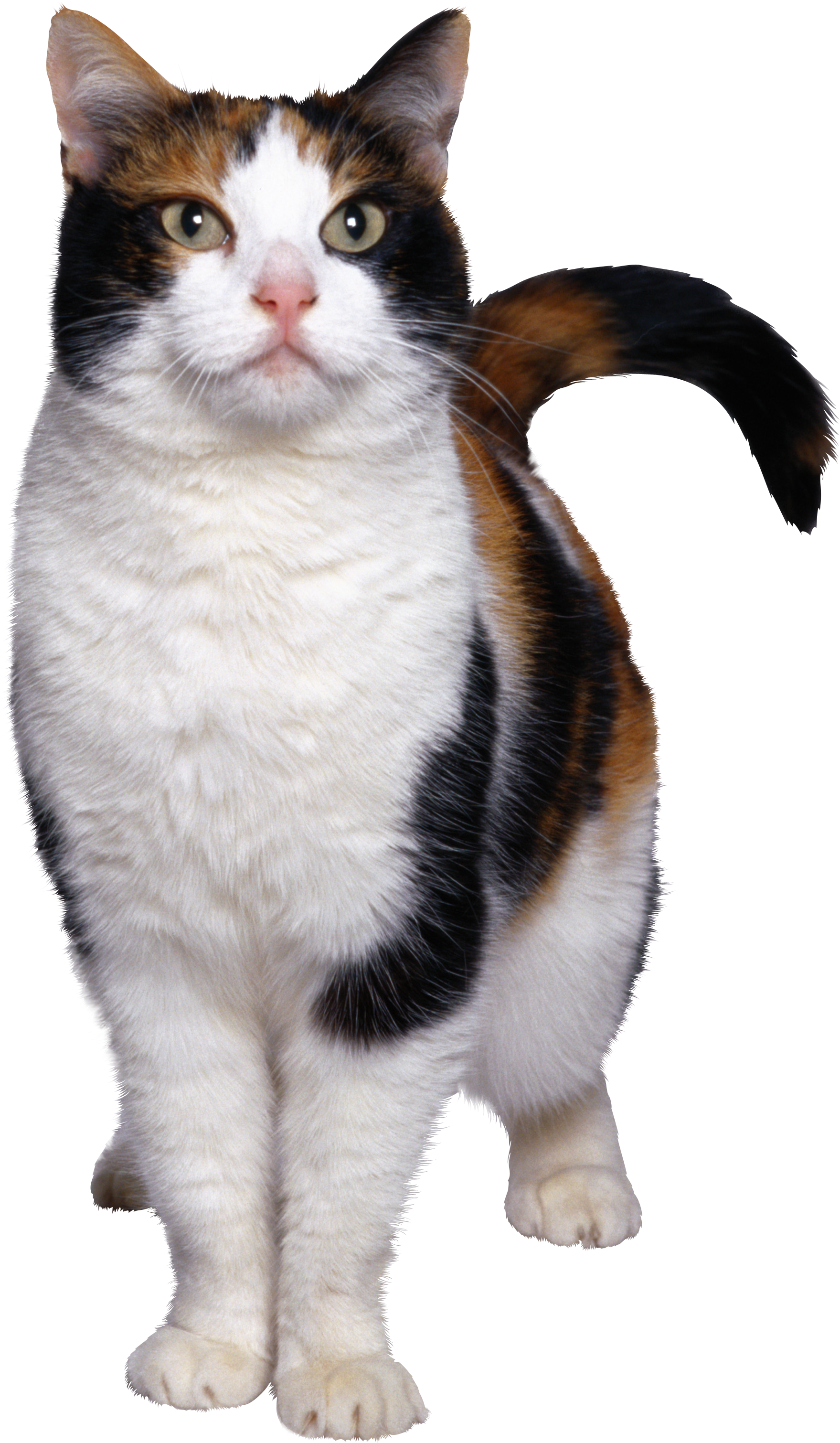 Wonderfull Cat Png image #40354