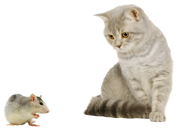 cat with mouse png