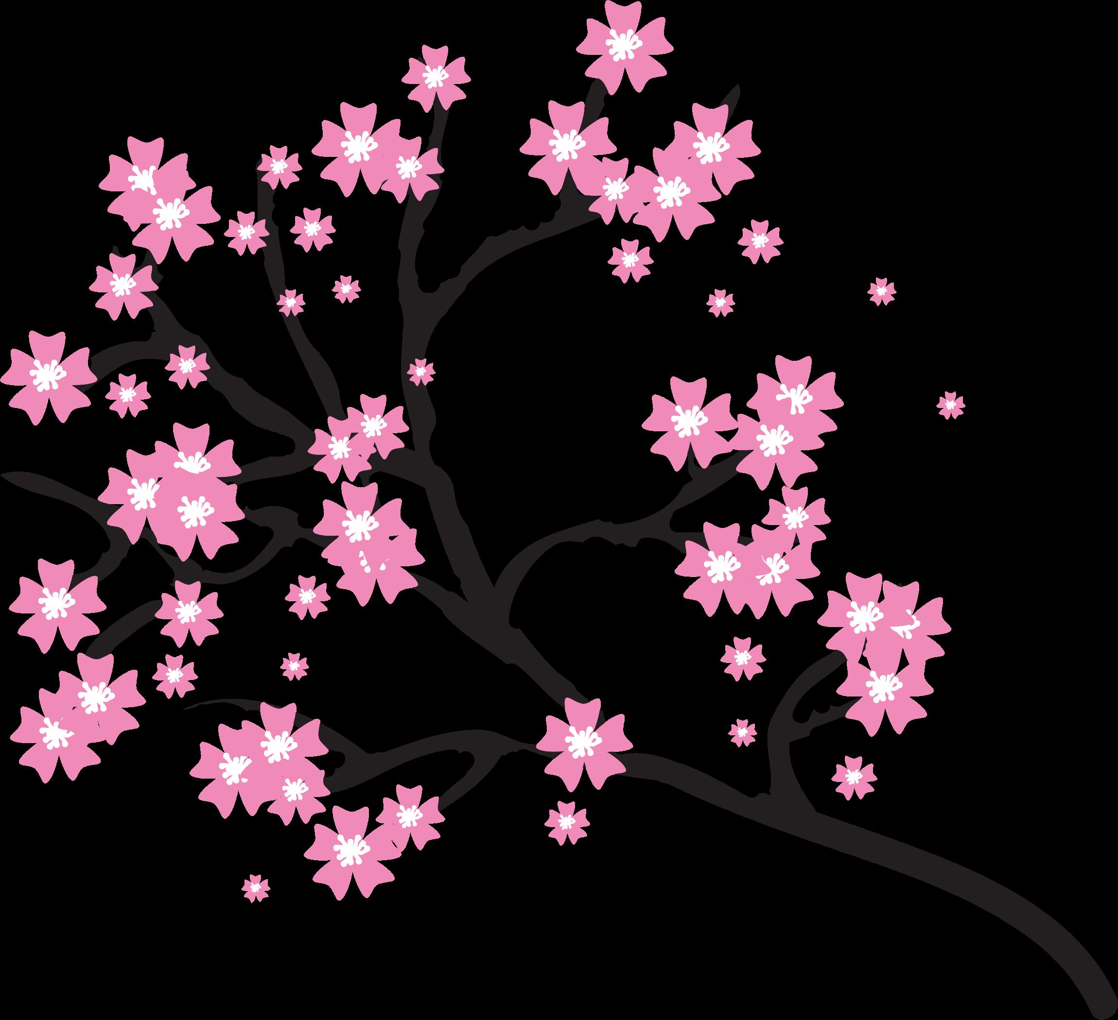 Cherry Blossom Photos