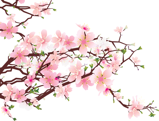 Cherry Blossom PNG Free Download image #45487