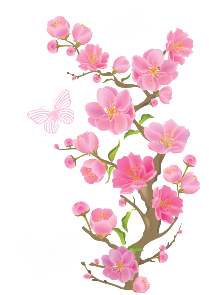 Cherry Blossom PNG HD image #45499