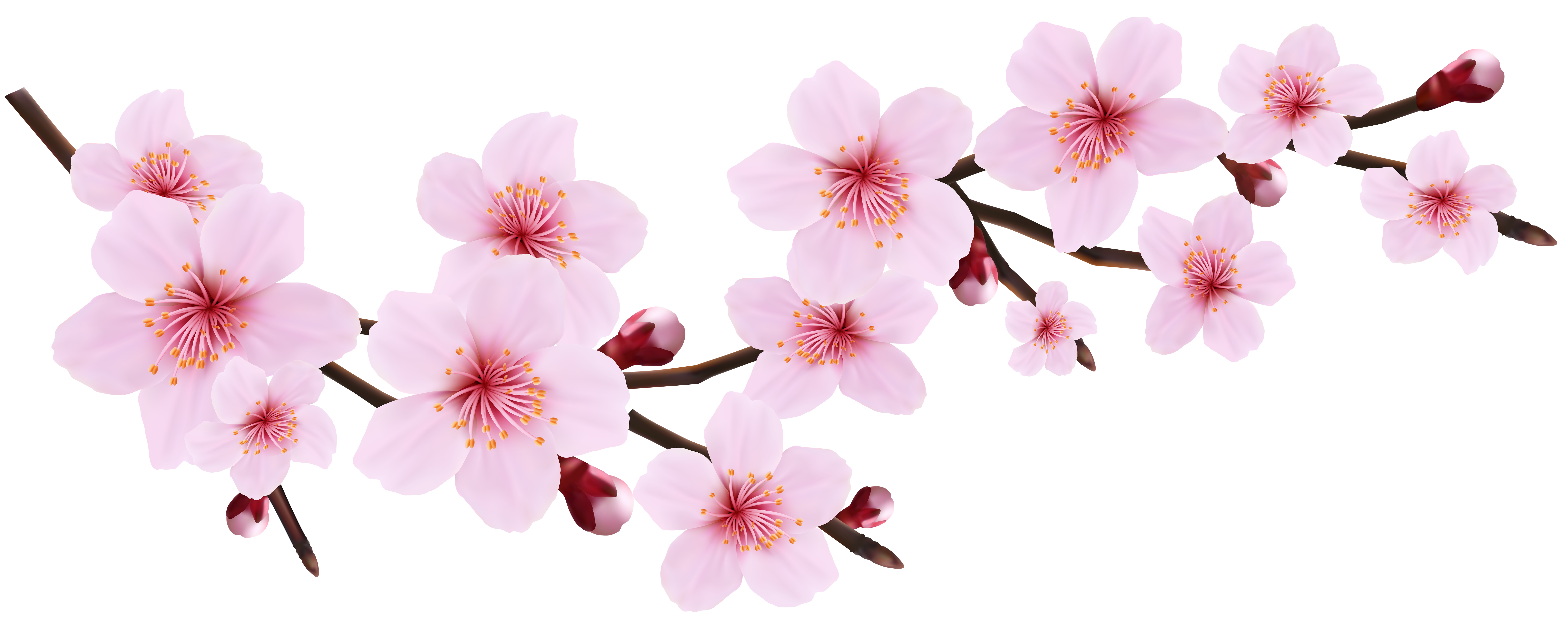 Cherry Blossom Png Images Free Download image #45485