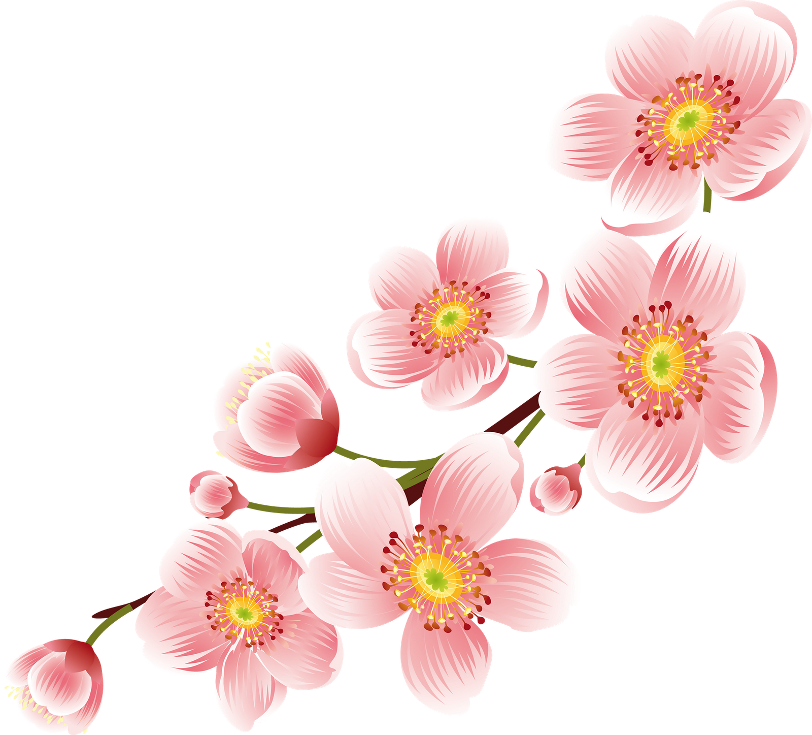 Cherry Blossom Png Transparent Background image #45486