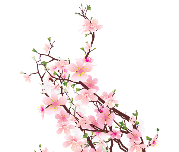 Cherry Blossom Transparent HD Background