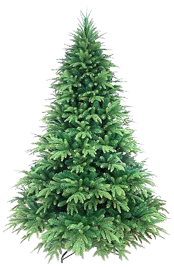 Christmas Tree Collection Clipart Png image #31873