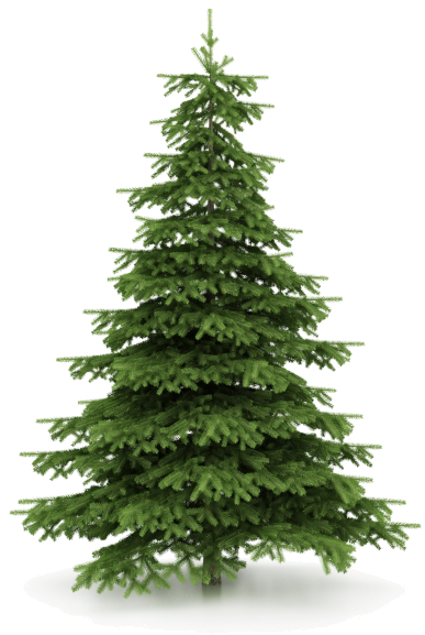 Christmas Tree Picture Download image #31857