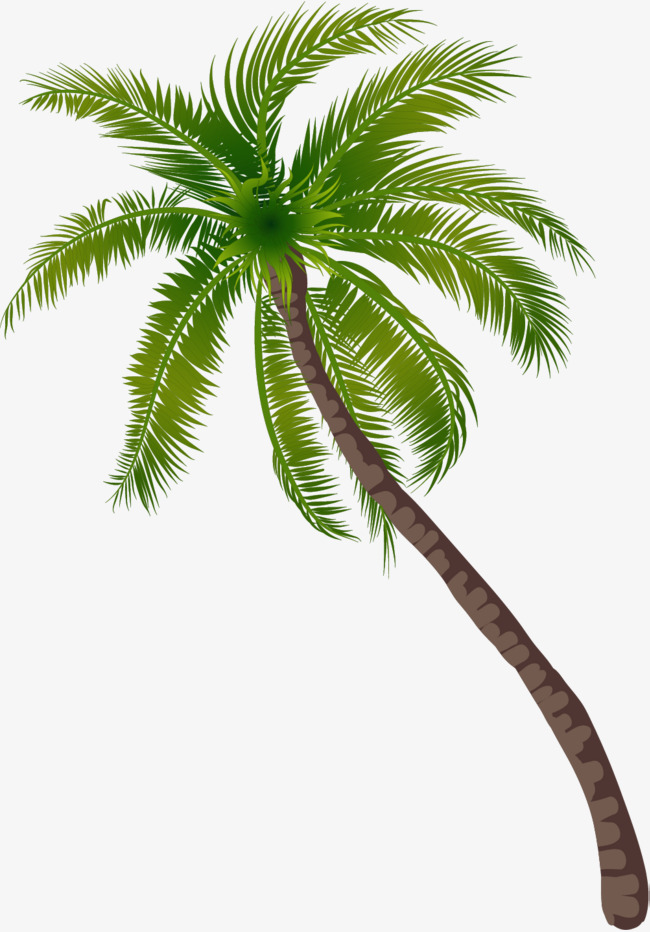 Coconut Tree Palm download coconut tree PNG images