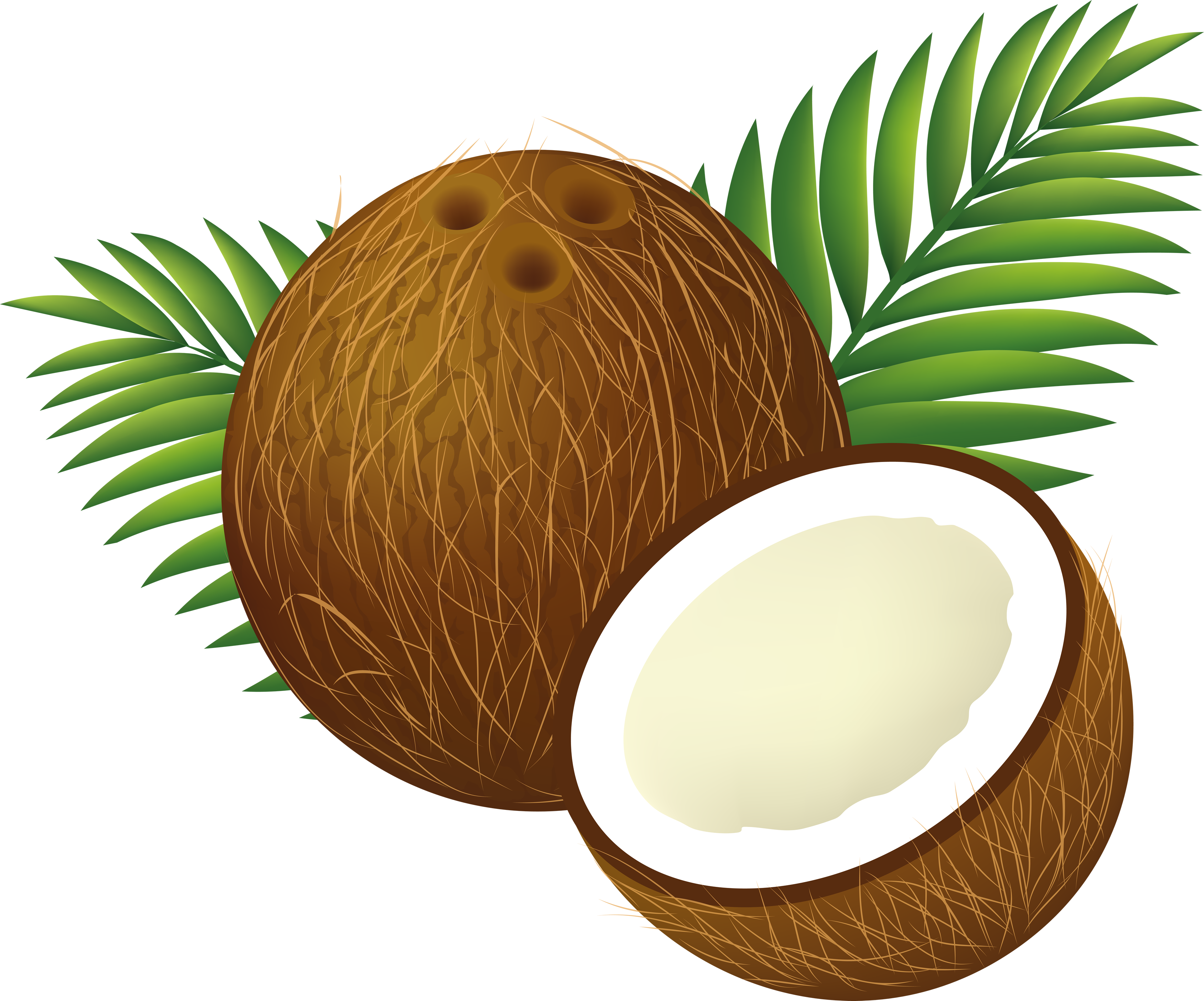 Coconut Tree PNG Clipart image #46414