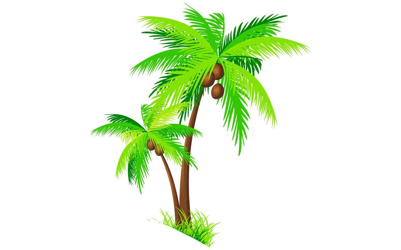 Coconut Tree PNG File image #46415