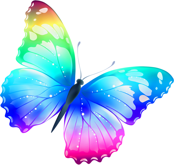 Colorful Butterfly Png image #6730