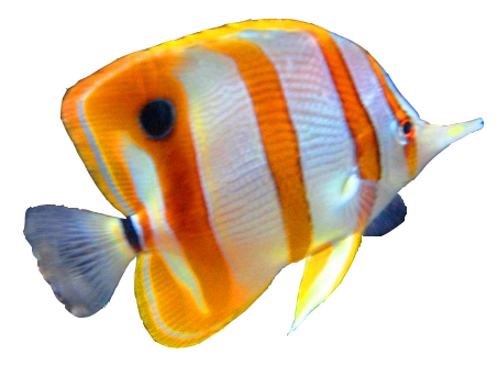 Colorful Fish Png image #41477