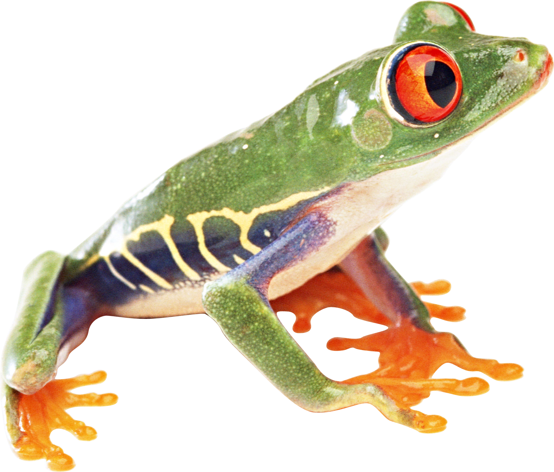 Colorful Frog PNG Image image #43150