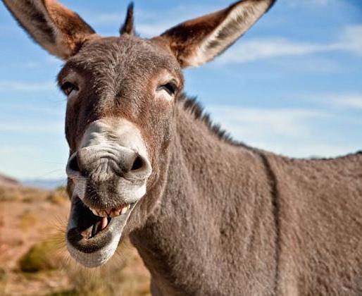 Comic Donkey Face Png Image