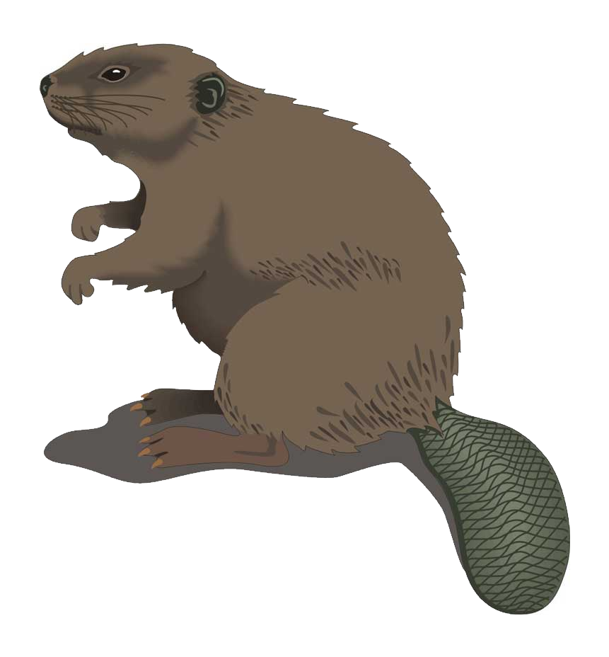 Confused Beaver PNG Images image #47733