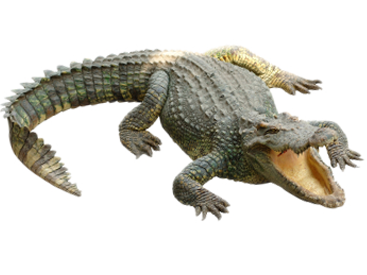 Crocodile Clipart PNG image #37516