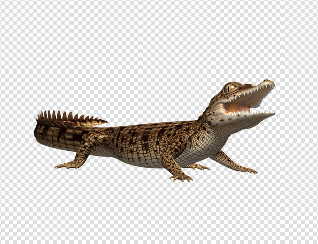 Images Download Crocodile Free image #37519