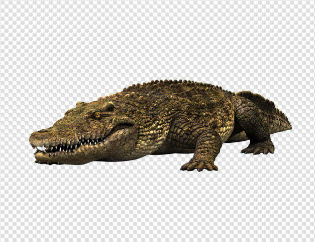 High Resolution Crocodile Png Clipart image #37522