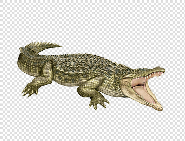 Clipart Collection Png Crocodile image #37525