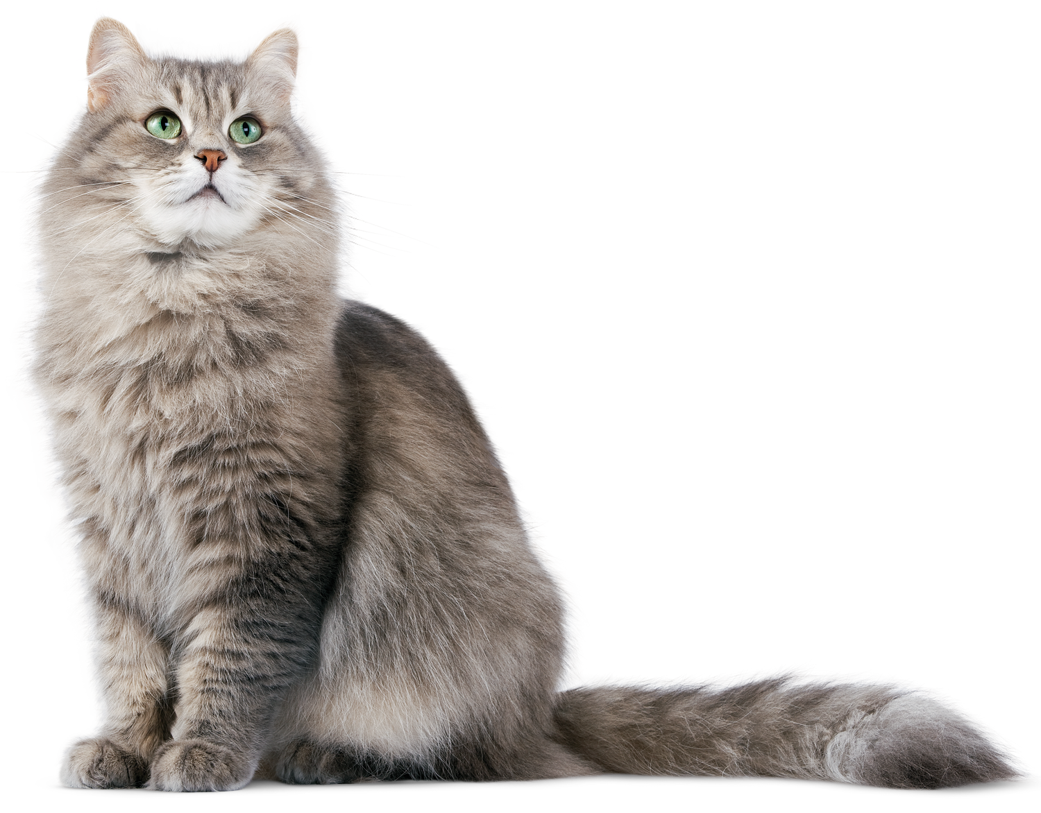 Cute Cat Png image #40346