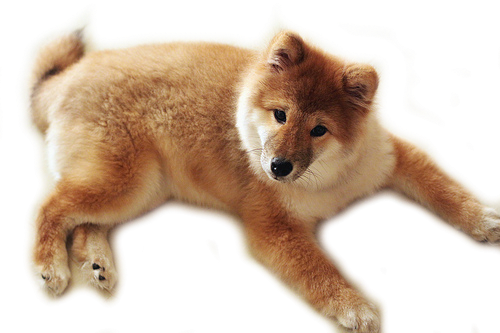 Cute Dog Png image #22643