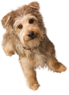 Cute Dog Png image #22645