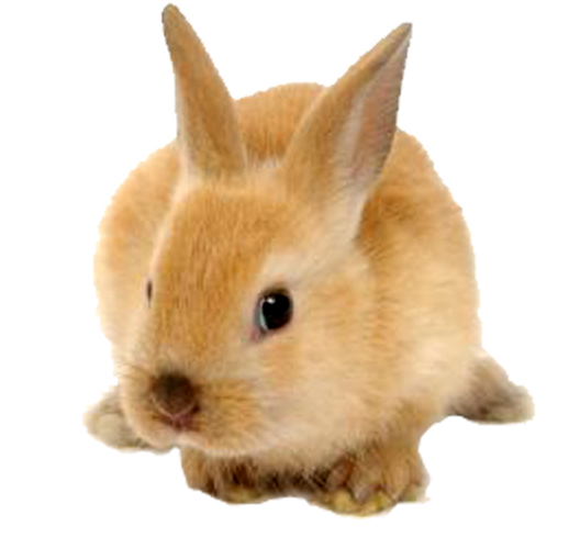 Cute Rabbit Png image #40326