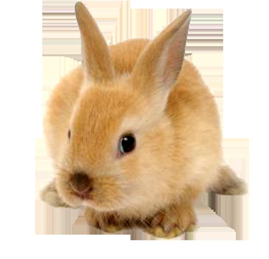 Cute Rabbit Png image #40326