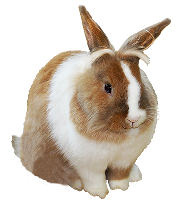 Cute Rabbit Png image #40342