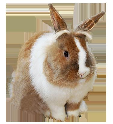 Cute Rabbit Png image #40342