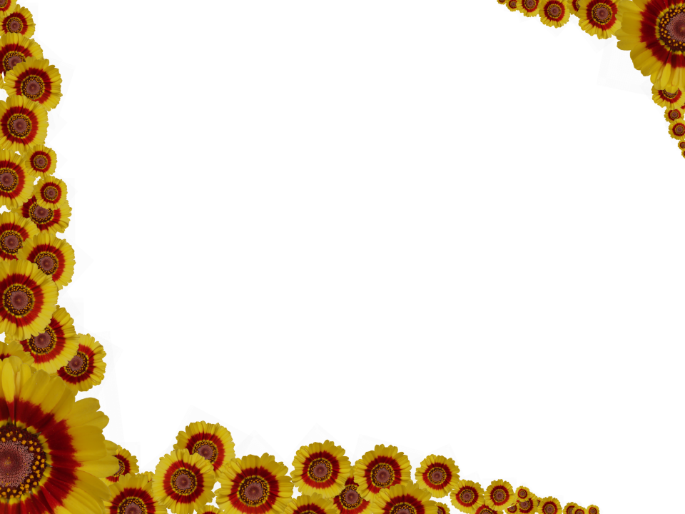 Daisy Flower Border Png #22957
