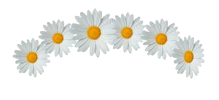 Daisy Flowers Crown Png image #42600