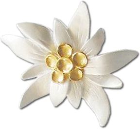 Daisy-shaped Yellow White Edelweiss Picture image #48575