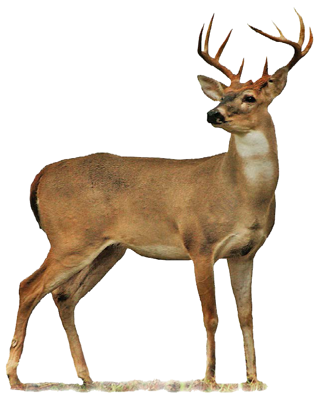 Deer Transparent Png Background image #32751