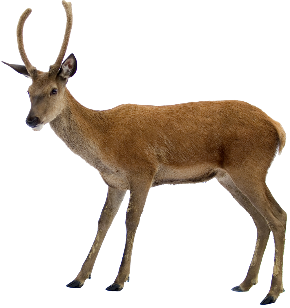 Use These Deer Vector Clipart image #32752