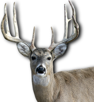 Hd Deer Image In Our System image #32761