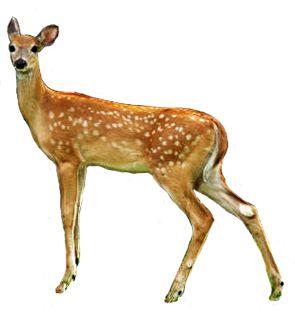 Use These Deer Vector Clipart image #32769