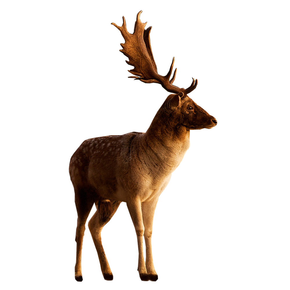 Download Free High-quality Deer Png Transparent Images image #32755
