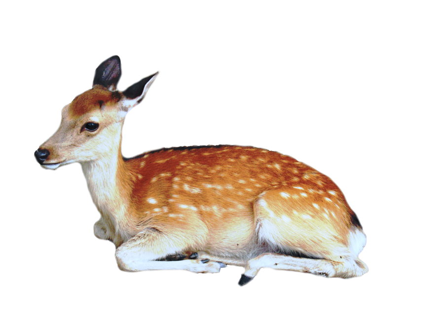 Deer Transparent PNG image #32756