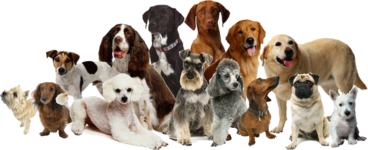 Dog Family Png image #22650